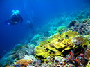 world best coral reef on Bunaken Isalnd
